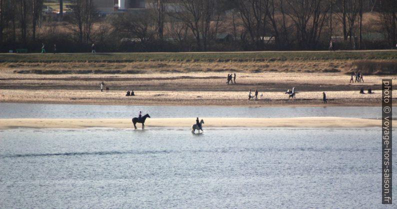 Chevaux sur la plage Falkenstein. Photo © André M. Winter