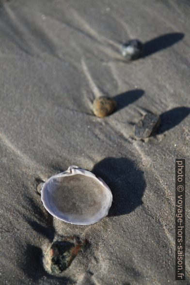Coquillages sur la plage. Photo © Alex Medwedeff