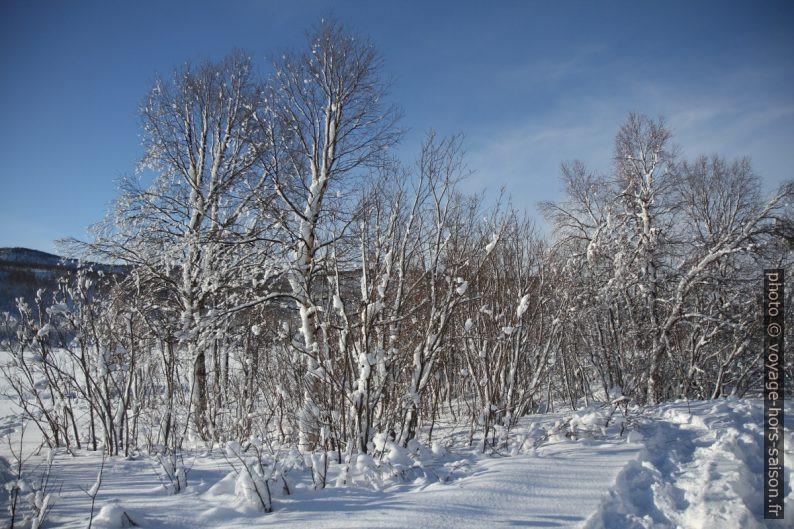 Neige collé sur les arbres par le vent. Photo © Alex Medwedeff