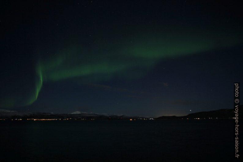Aurora buriali. Photo © Alex Medwedeff