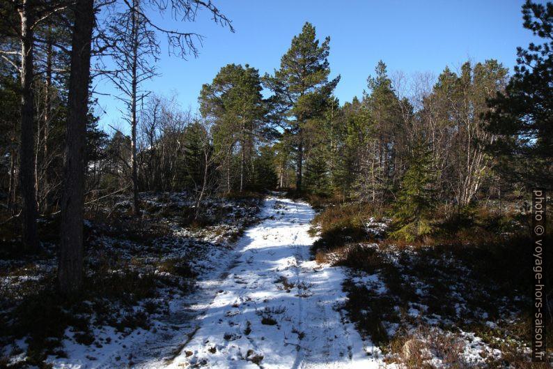 Route forestière en hiver