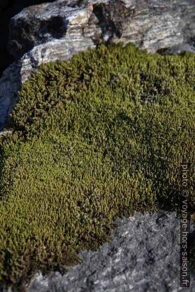 Mousse sur un rocher