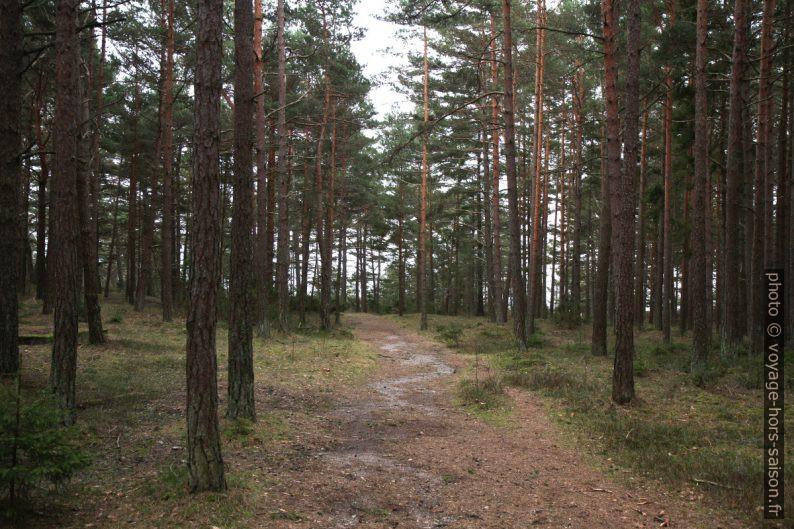 Forêt de Saltö. Photo © Alex Medwedeff