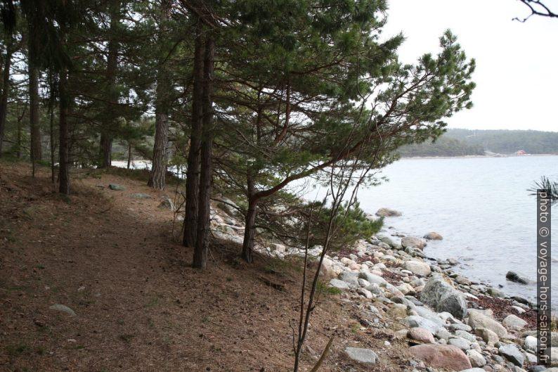 Forêt en bord de mer sur l'île de Saltö. Photo © Alex Medwedeff