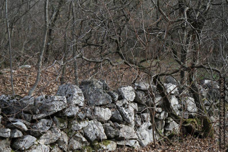 Mur en pierre sèche en forêt. Photo © Alex Medwedeff