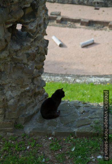 Chat noir dans le théâtre romain de Trieste. Photo © Alex Medwedeff