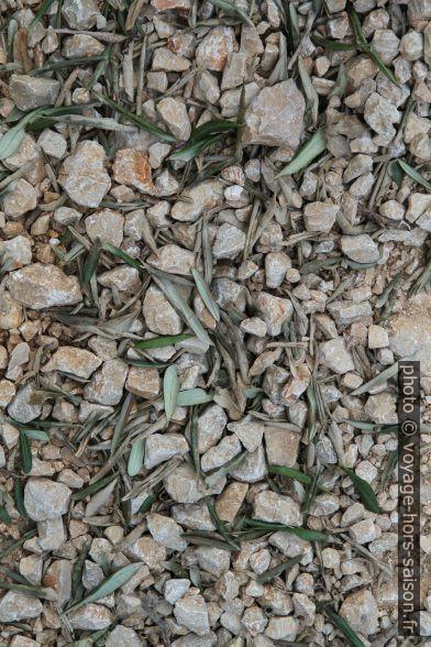 Feuilles d'oliviers tombés sur du gravier calcaire. Photo © Alex Medwedeff