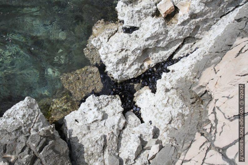 Des moules noires dans le calcaire blanc. Photo © Alex Medwedeff