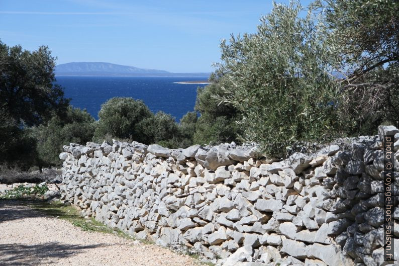 Oliviers, mur calcaire et la mer. Photo © André M. Winter