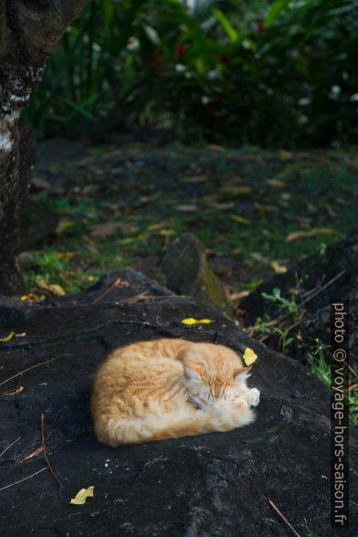 Le chat dormant dans son creux sur le rocher. Photo © Alex Medwedeff