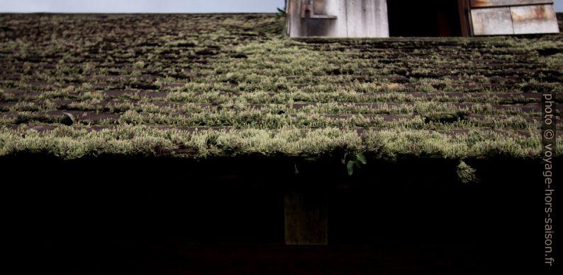 Lichens sur un toit. Photo © André M. Winter