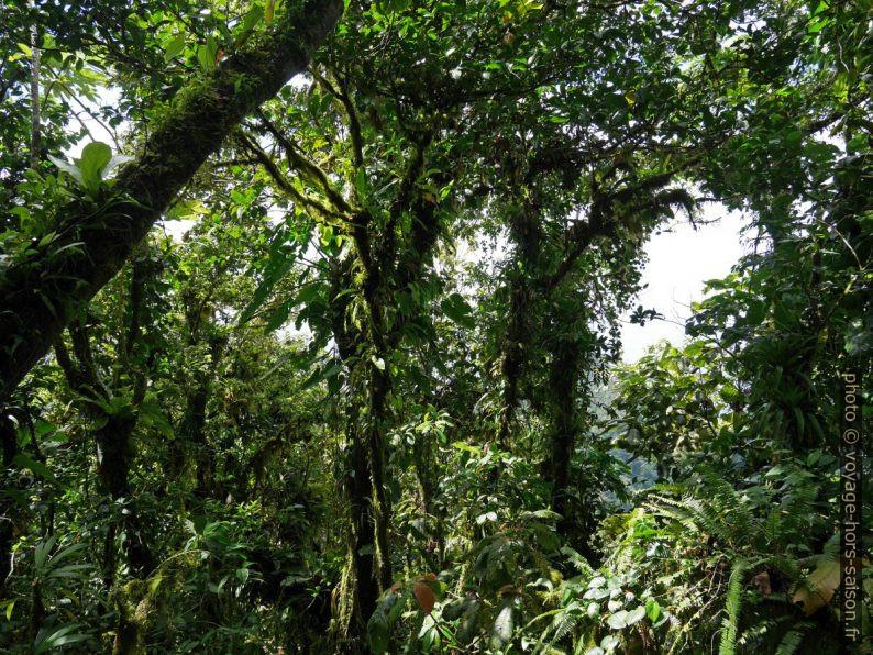 Forêt tropicale avec plantes épiphytes. Photo © André M. Winter