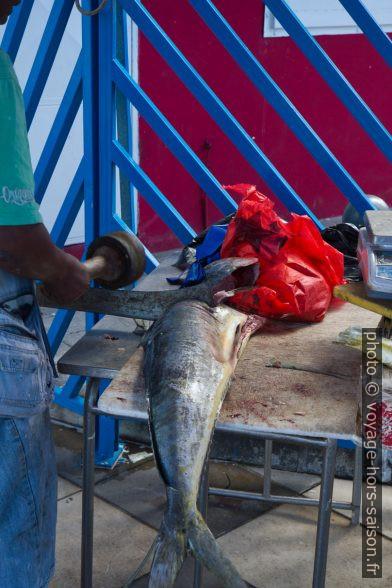 Dépècement d'un gros poisson à la machette. Photo © Alex Medwedeff