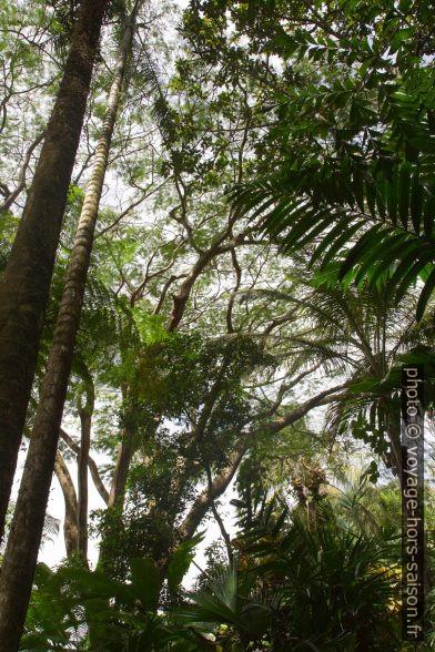 Arbres hauts en Guadeloupe. Photo © Alex Medwedeff