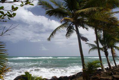 Anse du Bananier et palmiers de la jetée. Photo © Alex Medwedeff