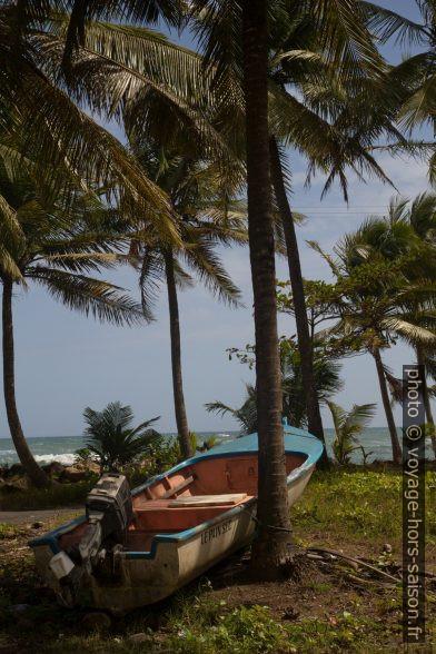 Barque motorisée attachée à un palmier. Photo © Alex Medwedeff