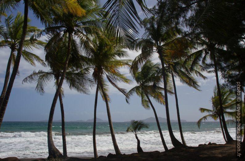 Palmiers de la Grande Anse de Capesterre. Photo © Alex Medwedeff