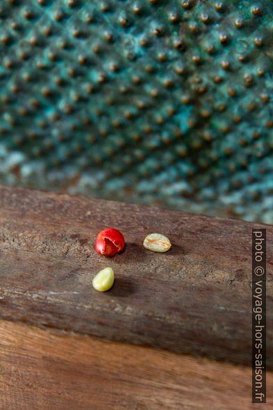 Pulpe décerisée, graine parche et graine décoriquée. Photo © Alex Medwedeff