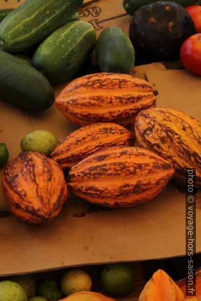 Cabosses de cacao. Photo © Alex Medwedeff