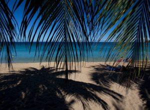 Vue de la plage à travers des feuilles de palmier. Photo © André M. Winter