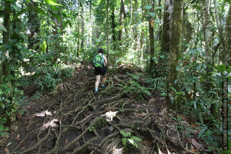 Alex passe un chemin couvert de racines. Photo © André M. Winter