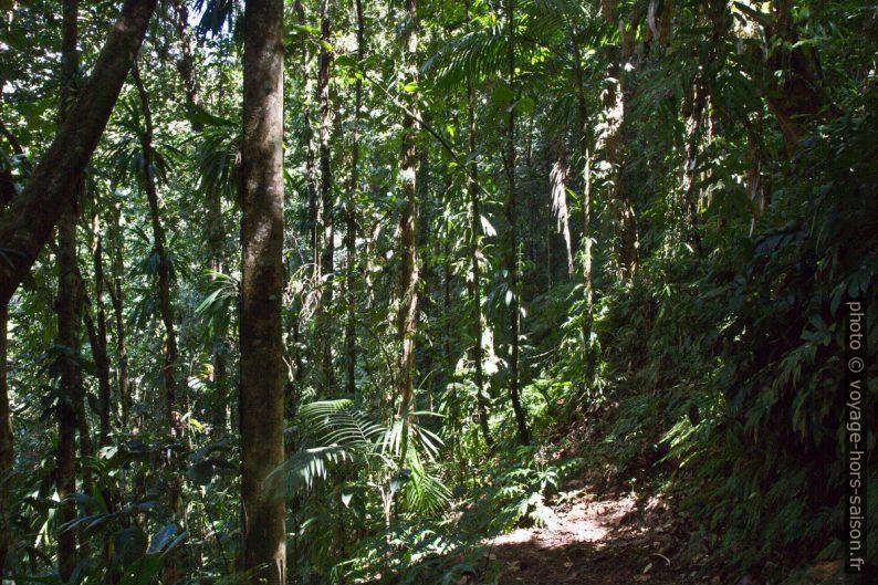 Chemin dans la forêt tropicale avec plantes épiphytes. Photo © Alex Medwedeff