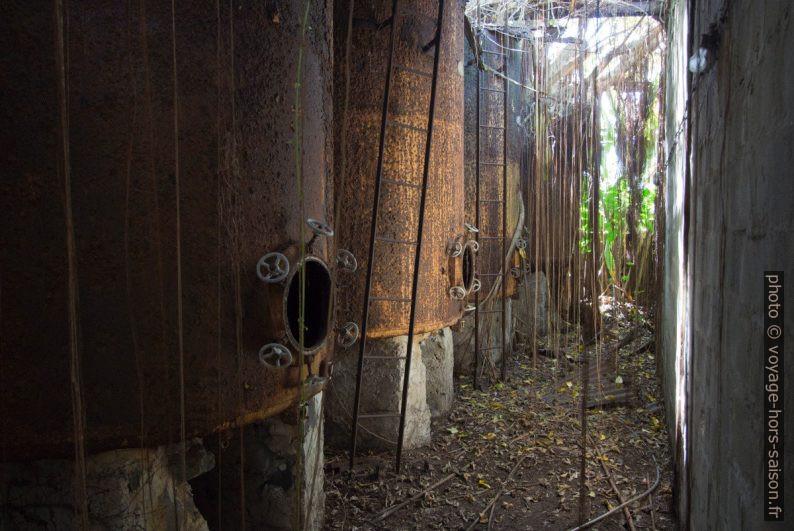 Racines aériennes entre les cuves de stockage de rhum. Photo © André M. Winter
