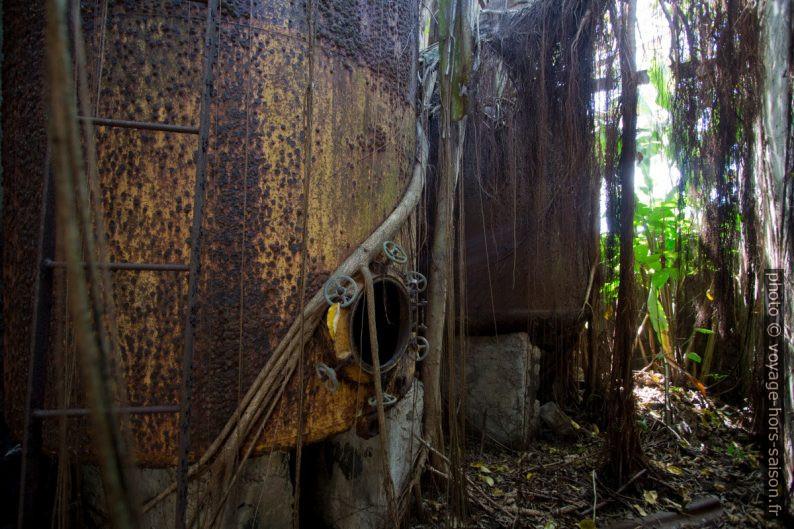 Racines couvrant les cuves de stockage de rhum. Photo © André M. Winter