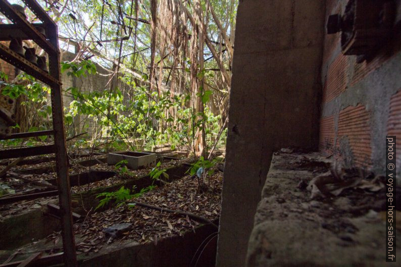 Halle de la rhumerie Grosse Montagne regagnée par la végétation. Photo © André M. Winter