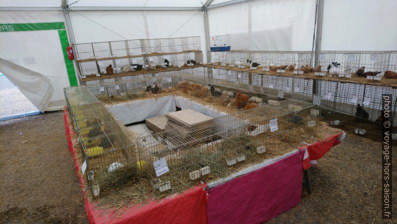Exposition-vente de volailles à la Foire de Brignoles. Photo © André M. Winter