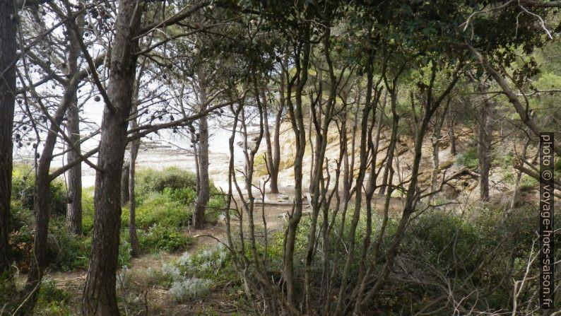 Forêt entre l'Estaniadou et la Pointe du Port-qui-Pisse