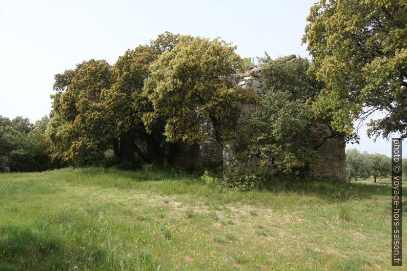 Face sud-est de la chapelle de Romanin cachée par des grands chênes. Photo © André M. Winter