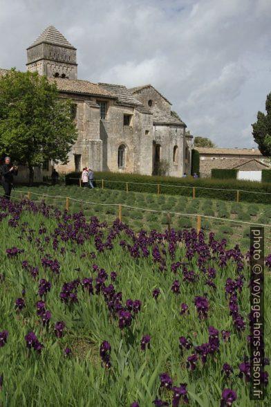 Champ d'iris et l'ancien prieuré de St. Paul de Mausole. Photo © Alex Medwedeff