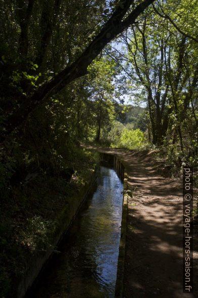 Le chemin ombragé au bord du Canal de Carcès. Photo © Alex Medwedeff