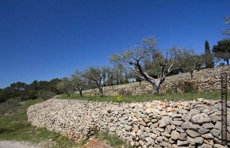 Larges murs de pierre formant des terrasse pour les oliviers. Photo © André M. Winter