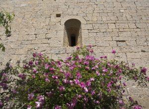 Fleurs sous une minuscule ouverture de la façade sud. Photo © André M. Winter