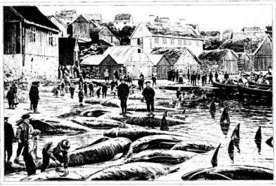 """""""On pousse vers la plage les cadavres des dauphins, qui ont environ 6 mètres de long"""""""