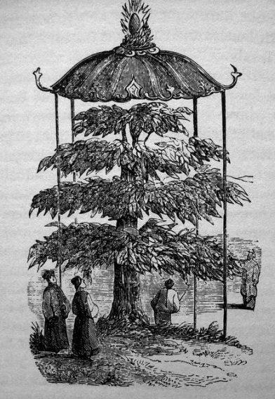 L'arbre aux 10000 images