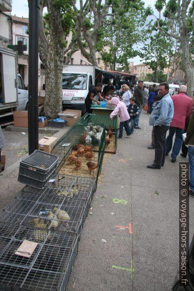 Poussins et poules vendus vivants au marché de Gardanne. Photo © André M. Winter