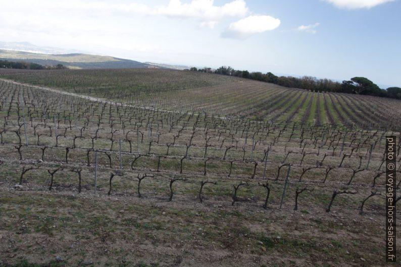 Champ de vignes au sud de la Rouillère. Photo © André M. Winter