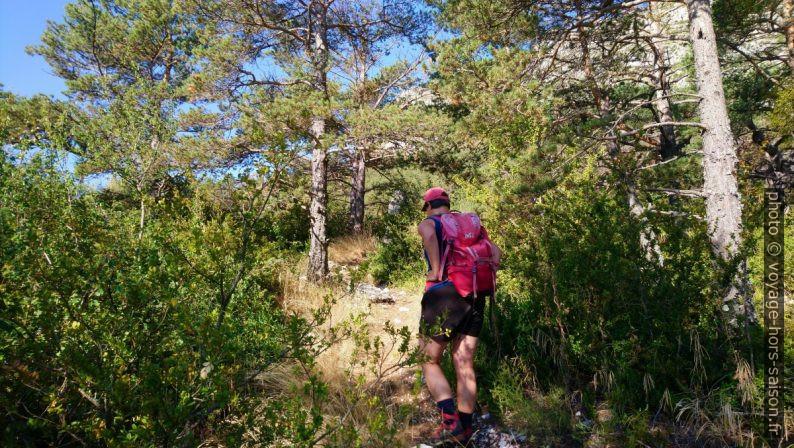 Alex monte dans la forêt. Photo © André M. Winter