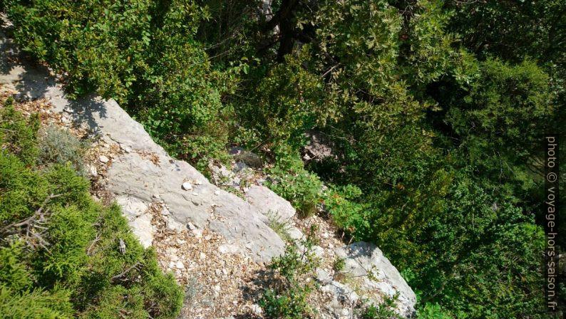 À droite sur les rochers avant le chêne. Photo © André M. Winter