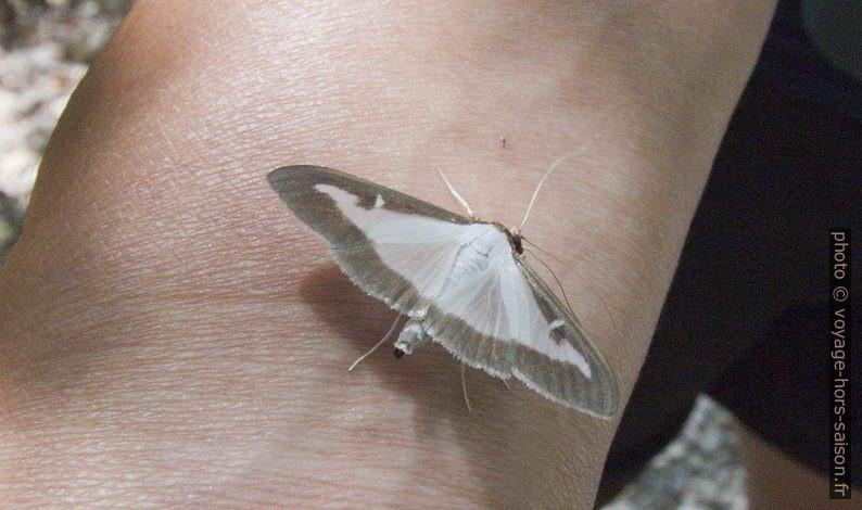 Un papillon. Photo © André M. Winter