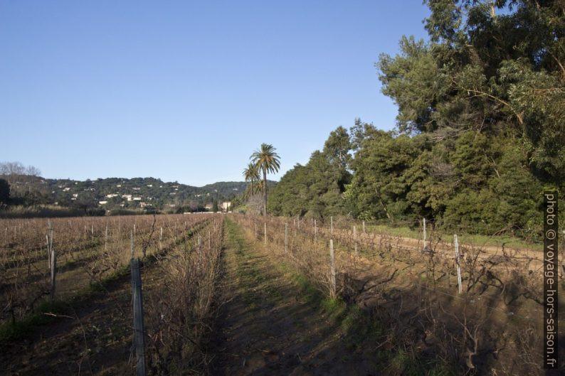 Vignes sous le Château de Valmer. Photo © André M. Winter