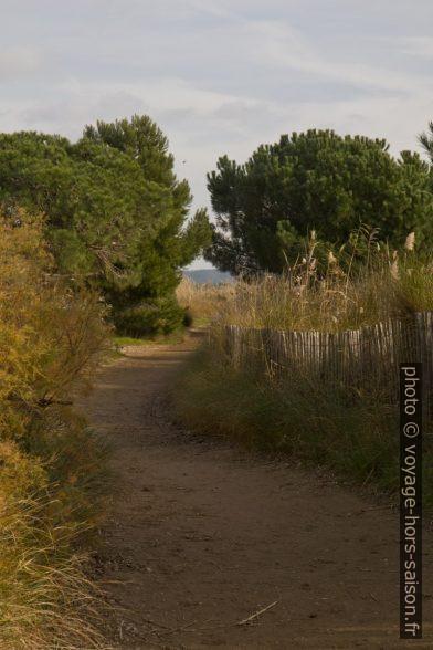 Sentier du littoral à l'arrière de la Plage du Pentagone. Photo © Alex Medwedeff