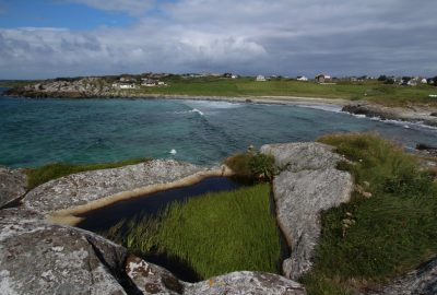 Plantes aquatiques d'eau douce dans une cuvette rocheuse près de la mer. Photo © André M. Winter