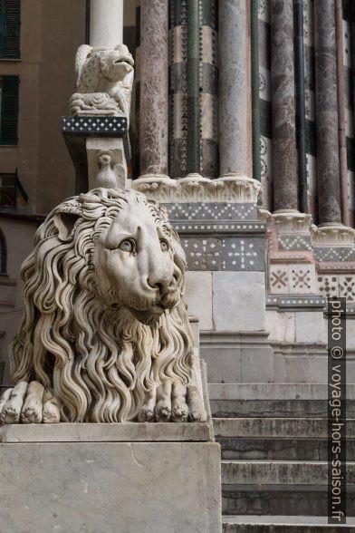 Lion gauche de la Cathédrale San Lorenzo de Gênes. Photo © Alex Medwedeff