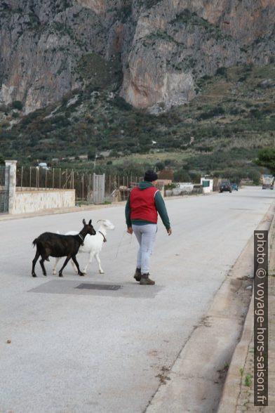 Homme avec deux chèvres sur la route. Photo © Alex Medwedeff