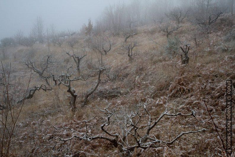 De la neige fraîche tombe sur l'Etna. Photo © Alex Medwedeff