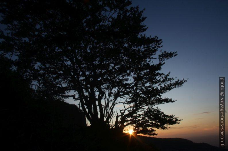 Coucher de soleil entre les arbres. Photo © André M. Winter